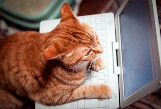 Картинки котов за компом