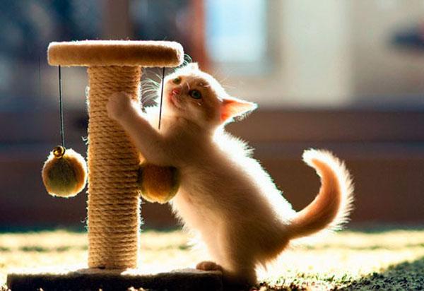 Кошачьи коготки