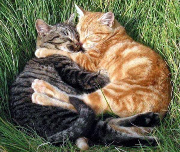 Любовь и кошки