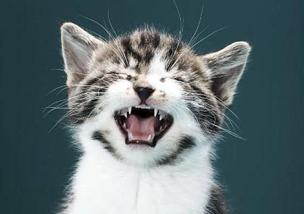 Как выбрать имя для кошки?
