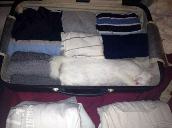 Найди кота путешественника